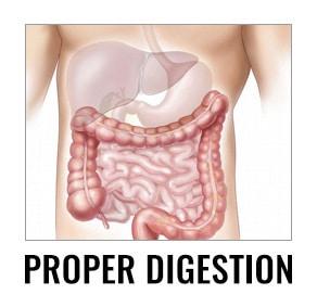 proper-digestion